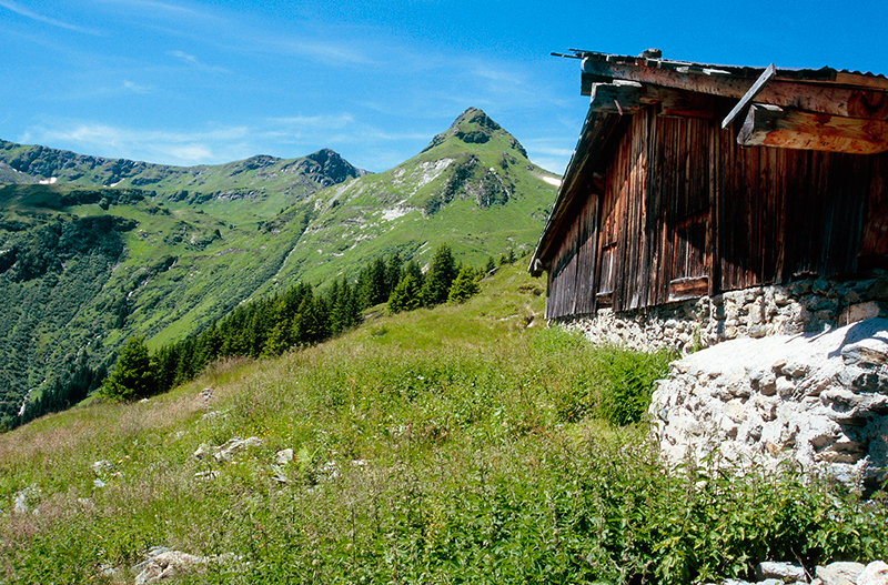 Hotel Panther Saalbach Sommer